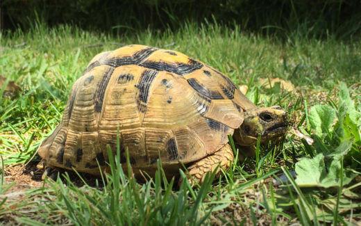 Schildkröten mit Frühlingsgefühlen Titelbild