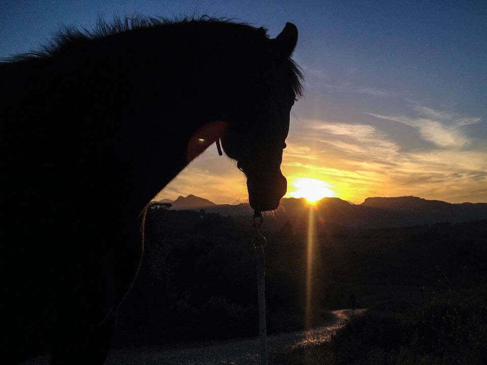Vierbeinige Begleiter Bonita Sunset