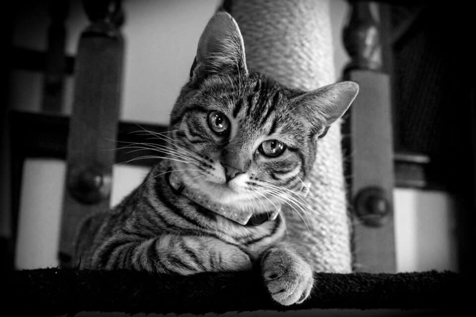 Mitbewohner auf vier Pfoten – Tabby Cat