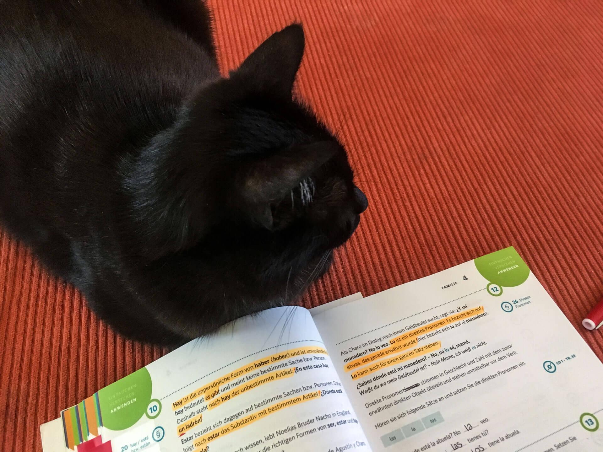 Die Sache mit dem Español - Lernen mit der Katze