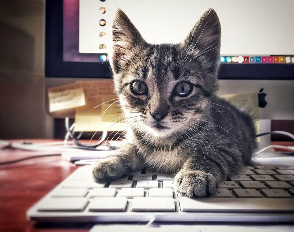 Tierische-Begleiter_Ronda__Tastatur