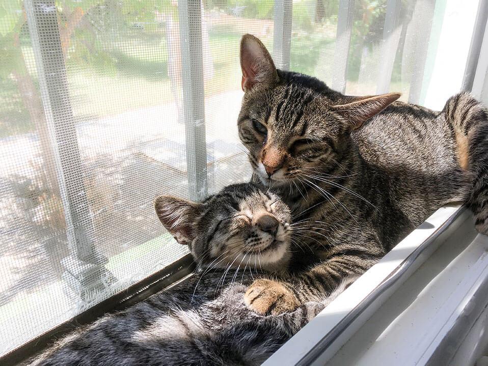 Tierische-Begleiter_Ronda__mit-Dafne-Fenster